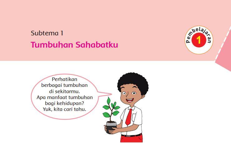 KUMPULAN Kunci Jawaban Kelas 6 Tema 1 Subtema 1 Tumbuhan Sahabatku